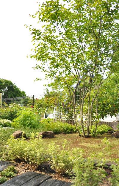 自然そのままに育てるジューンベリー:夷隅郡S様邸