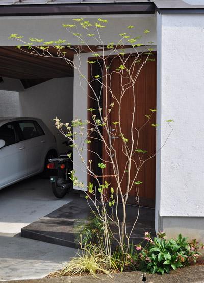 玄関の庭木と住まいの調和:横浜市K様邸