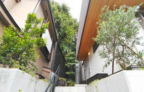 ギンバイカとオリーブの共演:世田谷区お客様邸