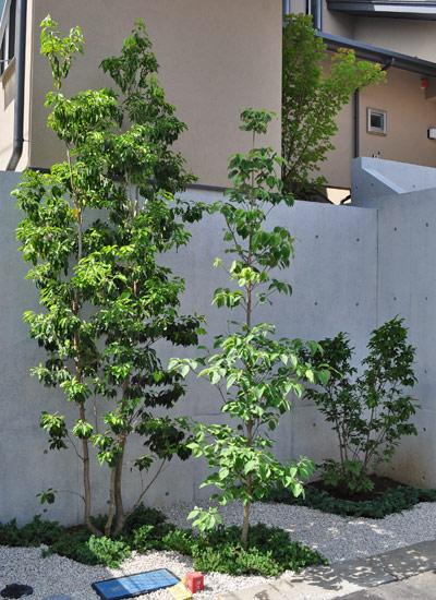 ハナミズキを他の庭木と合わせる
