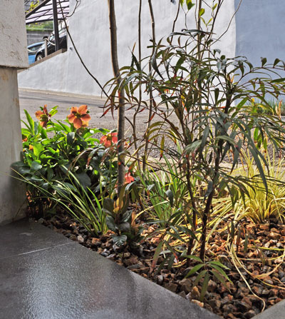日陰の庭:雑木足下のデザイン