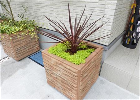プランター向きの植物は花壇にもおすすめです