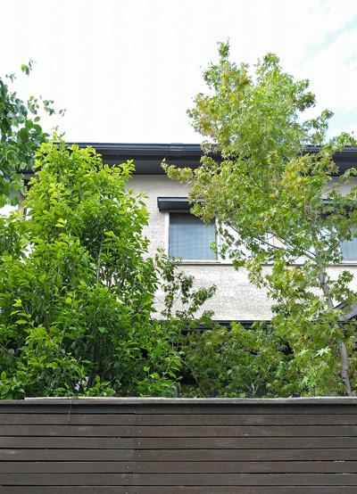 樹高のあるモミジは建物とのマッチングも美しく