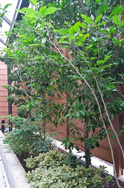 庭木による「植栽デザイン」