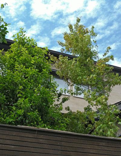 住まいに合わせた庭木選び:稲毛区S様邸
