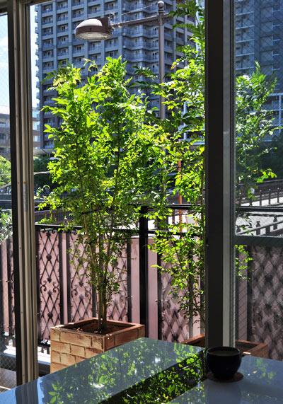 バルコニーをおしゃれに目隠しするプランター植栽