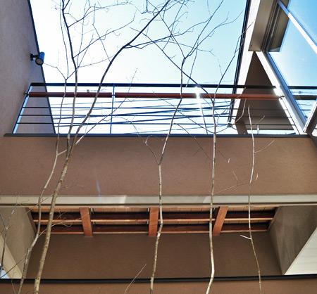柔らかな印象の落葉樹:写真はアオダモ