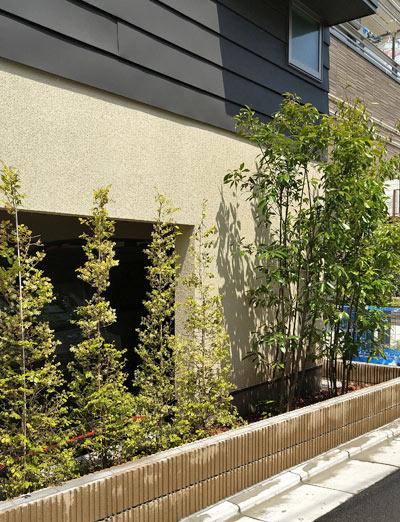 庭木の列植で目隠しを育てる:中野区N様邸