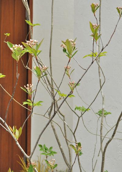 低木の自然樹形は雑木の幹とのマッチングも美しい