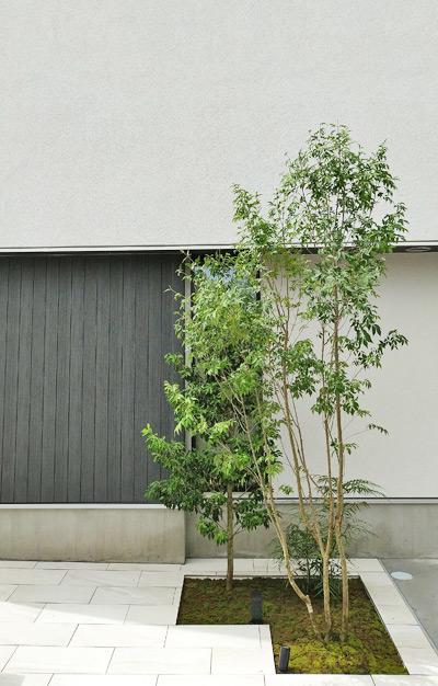 モダン住宅のシンボルツリーとして