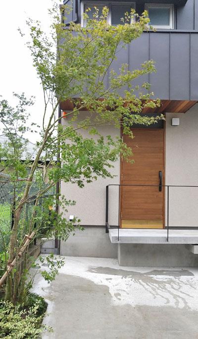 デザイン住宅とイロハモミジの融合