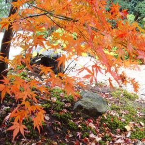 和風の庭で見る紅葉の美しさ