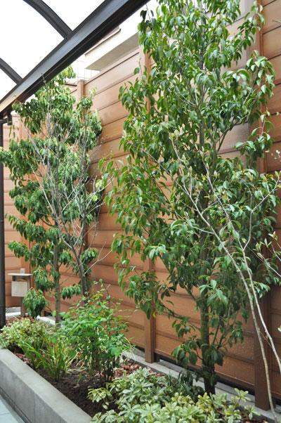 小さな低木類と合わせるソヨゴ