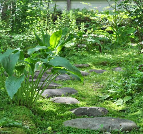 半日陰の和庭なら植物も幅広く