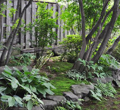 低木と下草による静けさ
