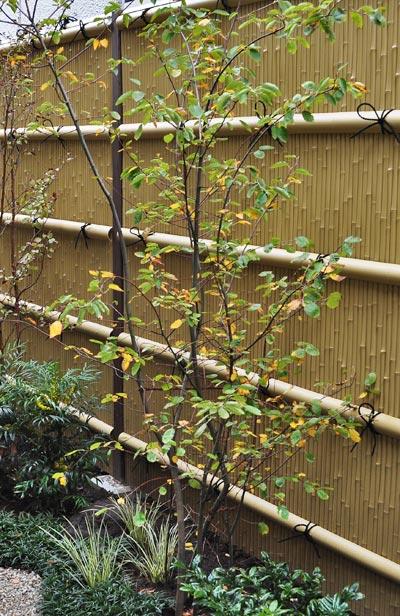 和風の庭に植えたジューンベリー