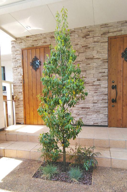 シンボルツリーのソヨゴが住まいに溶け込む