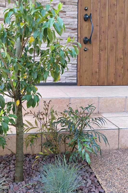低木とグラス植物のレイアウト