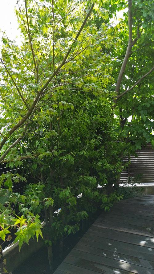 植栽で自然の中のウッドデッキを演出
