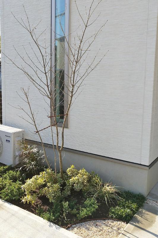 アオダモなら、枝が外壁を傷める事も少なく