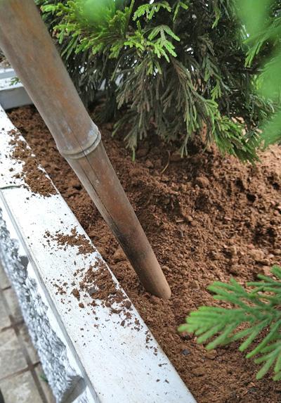 突き固めによる植栽作業