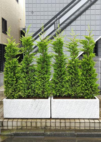 生垣風に仕立てたプランター植栽