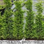 プランターへ植栽した生垣風のコニファーで目隠し効果を-八千代市S様邸