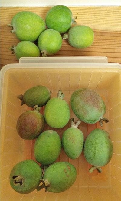 フェイジョアの果実を室温で追熟させる