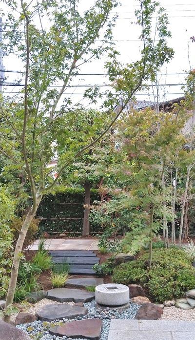 庭のデザインに被せるイロハモミジ