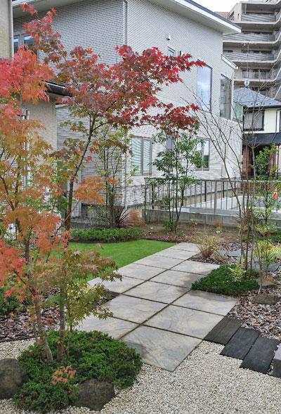 庭で紅葉を見せるイロハモミジ