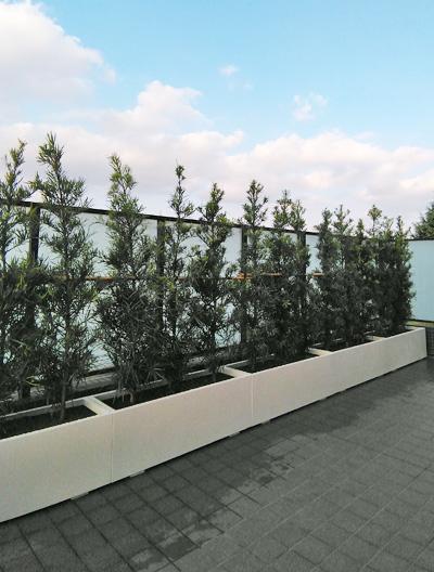 プランターや鉢植えに向いた庭木とは