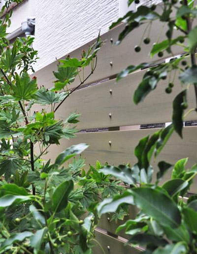 フェンスの目隠し効果を補助する庭木