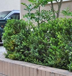 低木類ならコンパクトな生垣に