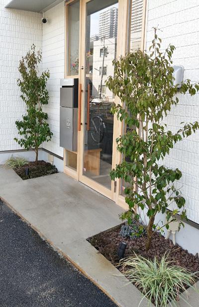 出入口を優しく包むシンボルツリー