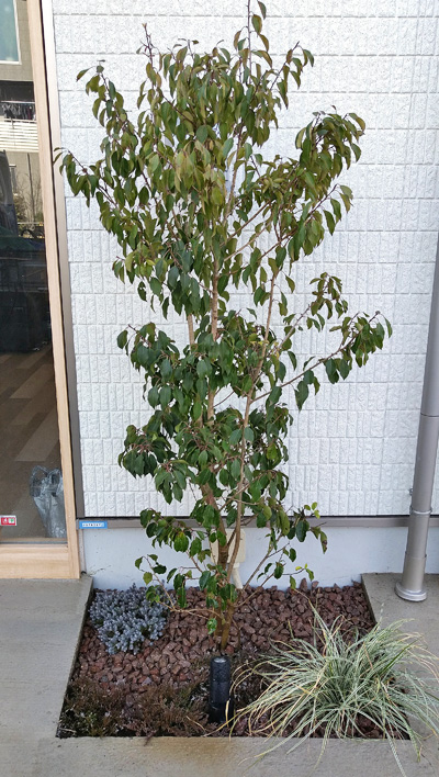 右側花壇の植栽レイアウト