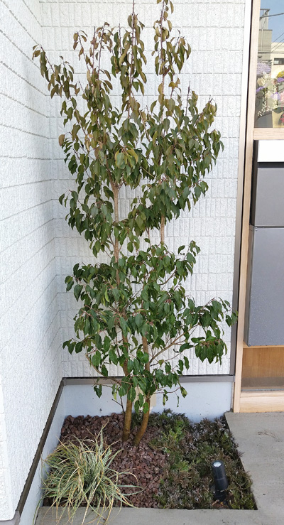 左側花壇にも統一性を持たせた植栽レイアウトを