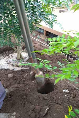風止めの要となる丸太を埋める