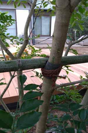 幹と竹を棕櫚縄で結束