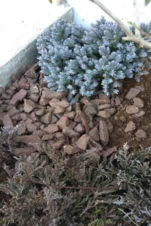 土の空間へレンガチップを敷き詰め