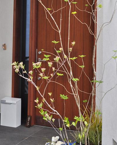 アロニアを他の雑木に寄せ植えする