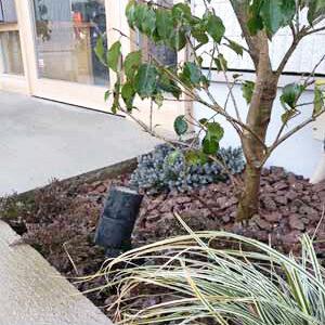 荒川区M工務店様-シンボルツリーのソヨゴと低木を使った植栽工事の様子