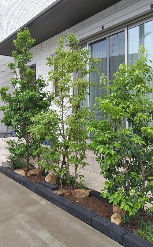 目隠しの庭木と2つの小さな花壇