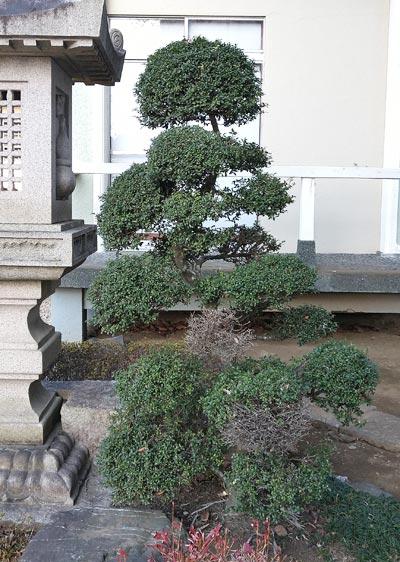 和風の庭に見られる「段作り」の仕立て