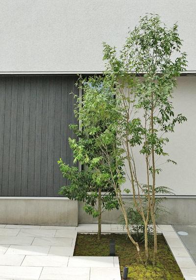 シンボルツリーと目隠しのみでまとめたシンプルな植栽