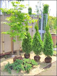 根を作られた「植木」