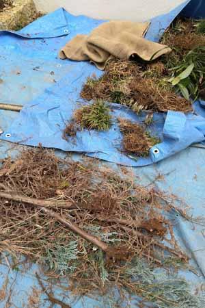 既存の庭木・植物を撤去