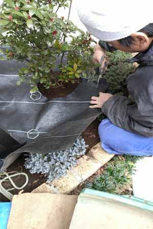 植栽部を避けて防草シートを
