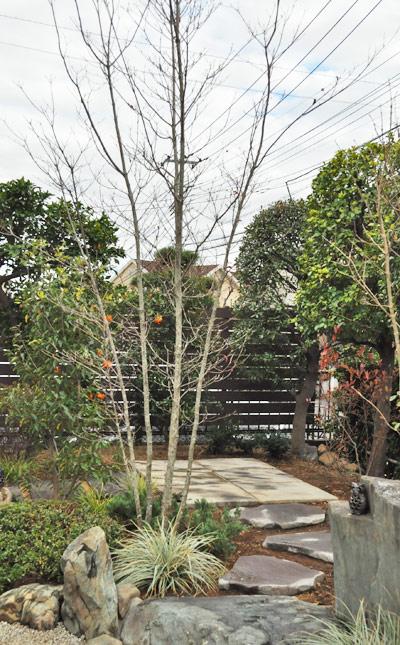 株立ち樹形の庭木:写真はヤマボウシ