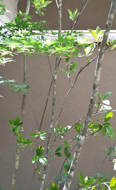 他種を寄せ植えして作る木立