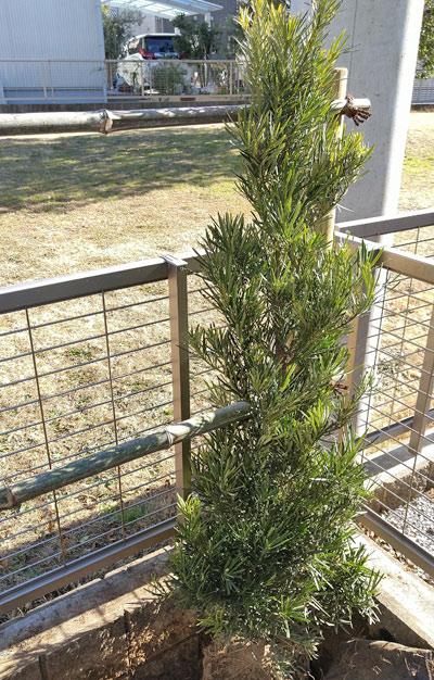 生垣用の植木